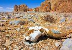 climate change extinctions biodiversity sperm