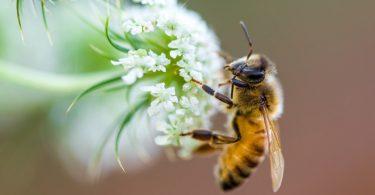 UK pollinator declines