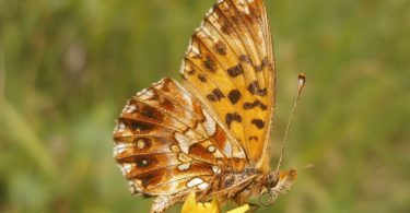 butterflies agriculture