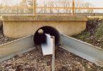 amphibian road tunnels