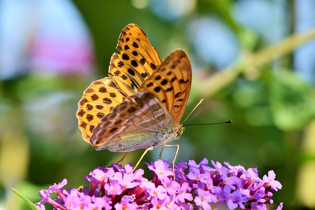 IPBES report extinctions